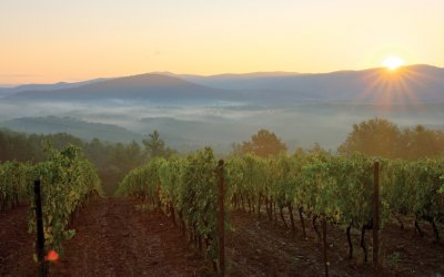 Vineyards with sun setting