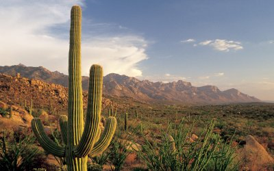 Open desert views with large cactus